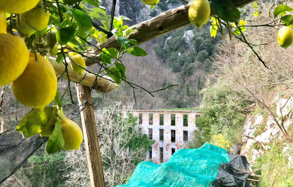 Cartiere e limoni